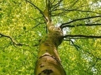 Yoga with Trees with Melissa Powell – June 23