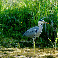 Guided Estuary Walks - June-September 2, 2019