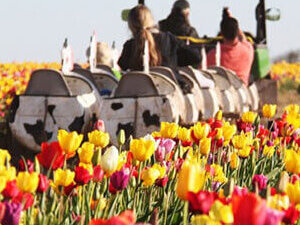 Wooden Shoe Tulip Farm Mother's Day Brunch