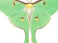 Magical Moths: National Moth Week