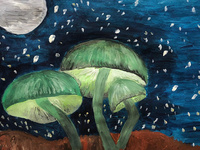 The Magic of Mushrooms: A display of student work