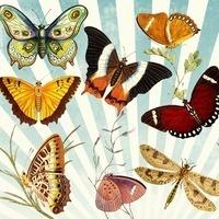 Wings of Wonder: A Butterfly Exhibit