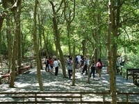 Sunken Forest Tour