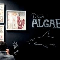 The Algae Society: Bio Art Design Lab