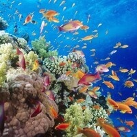 Art Explorers: Caribbean Sea