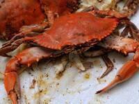 Alumni Crab Feast
