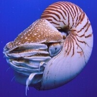 Science Sunday—Cephalopods Are the New Dinosaurs
