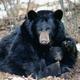 PA Black Bear