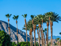 Palm Springs Scavenger Hunt: Discover Palm Springs with the ScavengerHunt.com app!