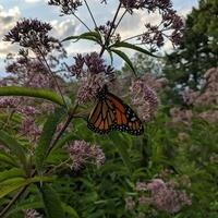Wildflowers and Butterflies Walk