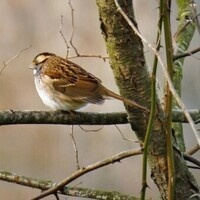 Knox County Birders