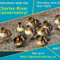 Volunteer at the Charles River Conservancy