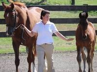 Breeding your mare - things to consider
