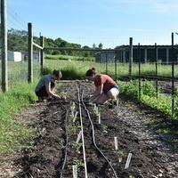 Community Garden Open Volunteer Hours