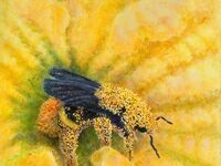 As the Bee Sees: A Pollinator's Perspective