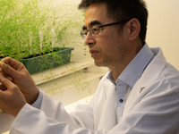 """""""Coupling sucrose metabolism with phloem unloading and sugar signalling for food and fiber production""""- Yong-Ling Ruan"""