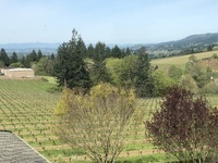 All-Inclusive Willamette Valley Wine & Lunch Tour