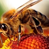 Attracting Pollinators & Other Beneficial Insects to Your Garden