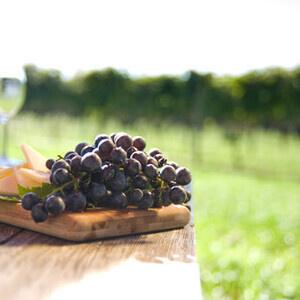 Vine to Wine Tour