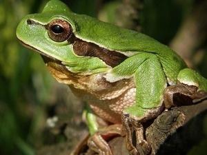 Toddler Trek Tuesday: Frog Friends