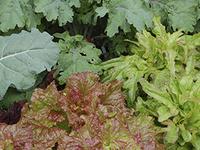 The Edible Home Landscape: A Garden-to-Table Program