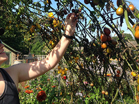 Harvest Sips and Samples: A Fall Equinox Tour