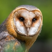 All About Animals with Irvine Nature Center