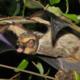 Pennsylvania Bats