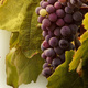 Continuing Education: Wine Appreciation Workshop