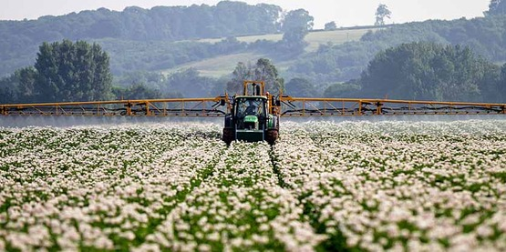 Roundup resistant weed control field event