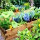 Master Gardener Training: Information Session