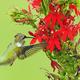 Intro to Bird-Friendly Gardening
