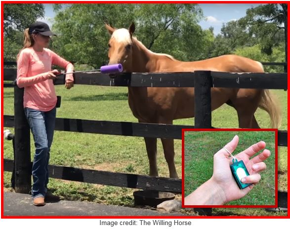 The Basics of Clicker Training Your Horse