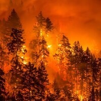 *Updated speaker* Ideas on Tap: Wildfires and Forest Management
