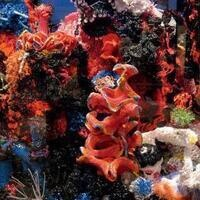 Crochet Coral Reef: By Margaret and Christine Wertheim and The Institute For Figuring | Art Galleries