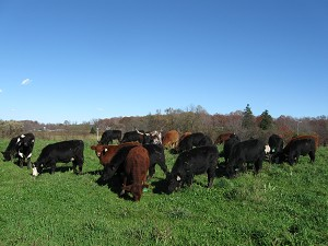 Veterans in Ag: Holistic Planned Grazing