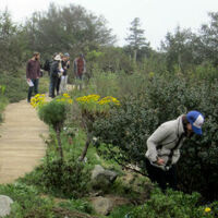 Community Science: Summer Phenology Walks at the UCSC Arboretum & Botanic Garden
