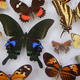 Naturalist Night: The Natural History of Insects