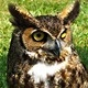 Learning at the Beach: Owls