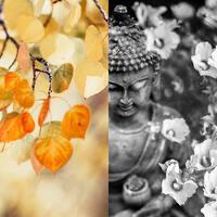 Annual Meditation Retreat: Cultivating Inner Stillness