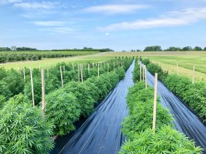 2019 Cornell Hemp Field Day