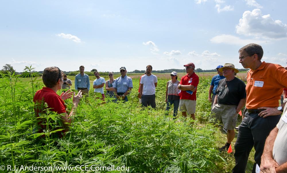 Cornell Hemp Research Field Day
