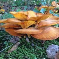 Mushroom Hike *Edited no mushroom specialist availlable!*