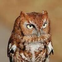 Who goes hoot in the Night? Owl Prowl Preregistration required