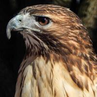 Hawks, Eagles, Owls, Oh my!