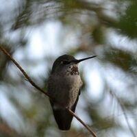 POSTPONED: UC Santa Cruz Alumni Excursion: Birding and Natural History of Santa Cruz and the Monterey Bay