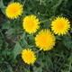 Seasonal Edible Plants
