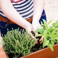 Learning for Life: Container Gardening Made Simple