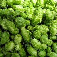 The Science of Dry-Hopped Beer