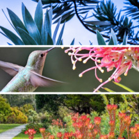 Garden Docent Training at UCSC Arboretum & Botanic Garden